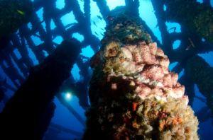 gulf reef