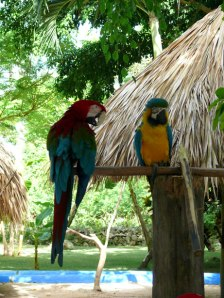 """Natural """"Parrot Heads"""""""