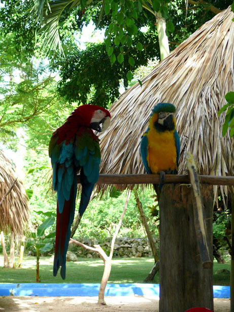"""The """"Parrothead"""" Effect"""