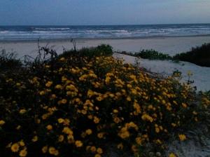 Fall flowers replace purple dune flowers.