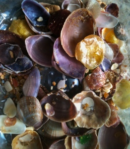 My collection of shells  Image copyright: http://thepollyannaplan.wordpress.com