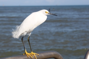 One of many coastal birds in Port Aransas.