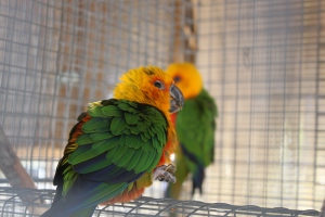 The kids loved the variety of colorful birds at the Corpus Christi Botanical Gardens.