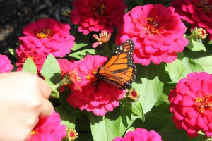 Playing with the butterflies was a total hit with both the kids and adults!