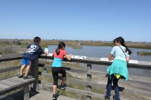 Watching the wildlife at the wetlands area of the Botanical Gardens.