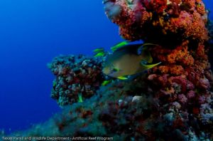 Photo courtesy of Texas Parks and Wildlife Artificial Reef Program