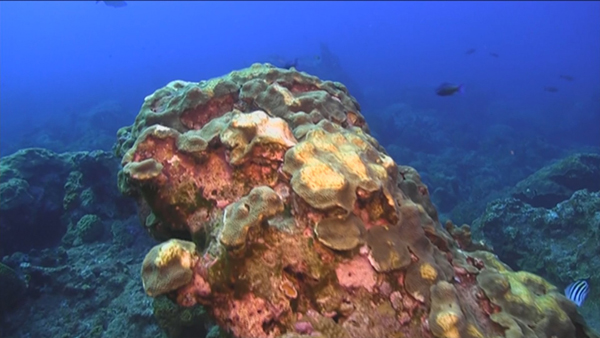 A Natural, Healthy Coral Reef off the Texas Coast?