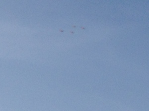 4 Rosette Spoonbills in flight.  (Sorry that the photo is bad.)