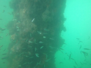Toward the end of my underwater adventure, I encountered a tangle of bait fish.