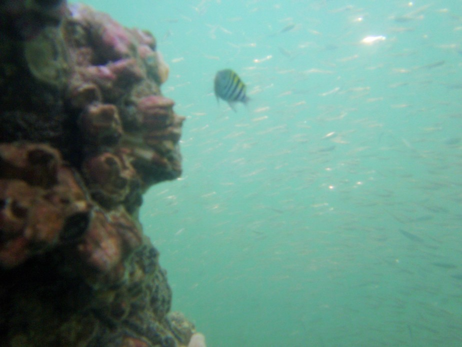 A Snorkeling Surprise in Port Aransas
